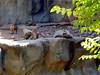 AZ-Phoenix-Zoo-2004-10-17-0009