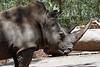 AZ-Phoenix-Zoo-Rhinoceros-2007-05-27-0001