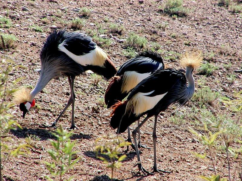 AZ-Phoenix-Zoo-2004-10-17-0019