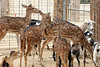 AZ-Phoenix-Zoo-Wildlife World-Petting Area-2006-07-02-0006