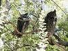 AZ-Phoenix-Zoo-2004-10-17-0017
