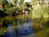 AZ-Phoenix-Zoo-2004-10-17-0026