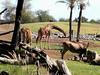 AZ-Phoenix-Zoo-2004-10-17-0004
