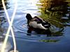 AZ-Phoenix-Zoo-2004-10-17-0028