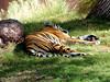 AZ-Phoenix-Zoo-2004-10-17-0021