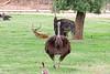 AZ-Phoenix-Zoo-Wildlife World-Red Neck Osterich-2006-07-02-0003