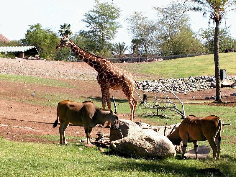 AZ-Phoenix-Zoo-2004-10-17-0005