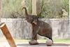 AZ-Phoenix-Zoo-Elephant-2006-07-04-0001