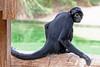 AZ-Phoenix-Zoo-Wildlife World-Monkey-2006-07-02-0001