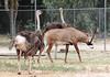 AZ-Phoenix-Zoo-Wildlife World-Red Neck Osterich-2006-07-02-0002