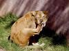 AZ-Phoenix-Zoo-2004-10-17-0022