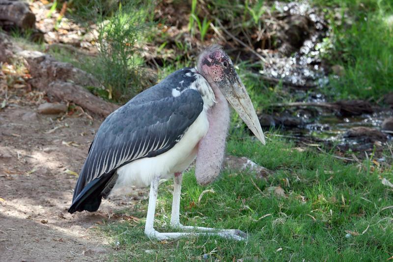 AZ-Phoenix-Zoo-Bird-2006-07-04-0002