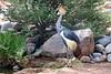AZ-Phoenix-Zoo-East African Crowned Crane-2006-07-04-0002