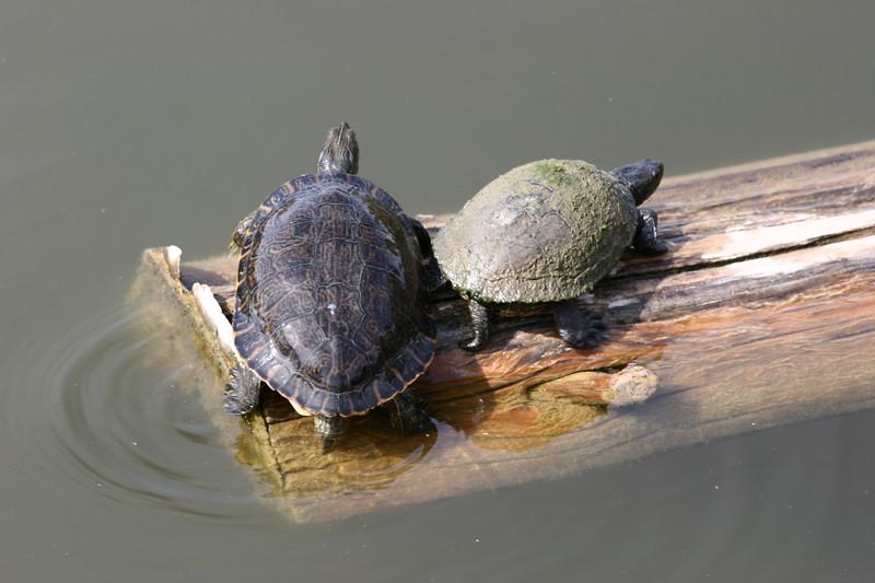AZ-Phoenix-Zoo-Turtle-2006-07-04-0002