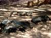 AZ-Phoenix-Zoo-2004-10-17-0007