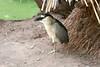 AZ-Phoenix-Zoo-Bird-2006-07-04-0010