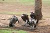 AZ-Phoenix-Zoo-Bird-2006-07-04-0006