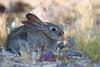 Rabbit-2008-05-06-0006