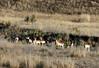 Antelope-2008-02-17-0003<br /> <br /> Shot east of Sonoita, AZ on Hwy-82