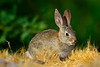 Rabbit-2008-95-08-0001
