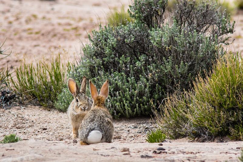 Rabbit Exchange