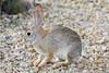 Rabbit-2009-01-25-0001