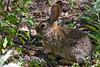 Rabbit-2010-04-06-0001