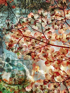 Dogwood Dream Series