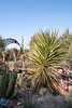 AZ-Phoenix-Desert Botanical Garden 2013-03-04-192