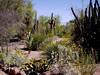 AZ-Phoenix-Desert Botanical Garden-2004-03-27-0012