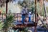 AZ-Phoenix-Desert Botanical Garden 2013-03-04-195