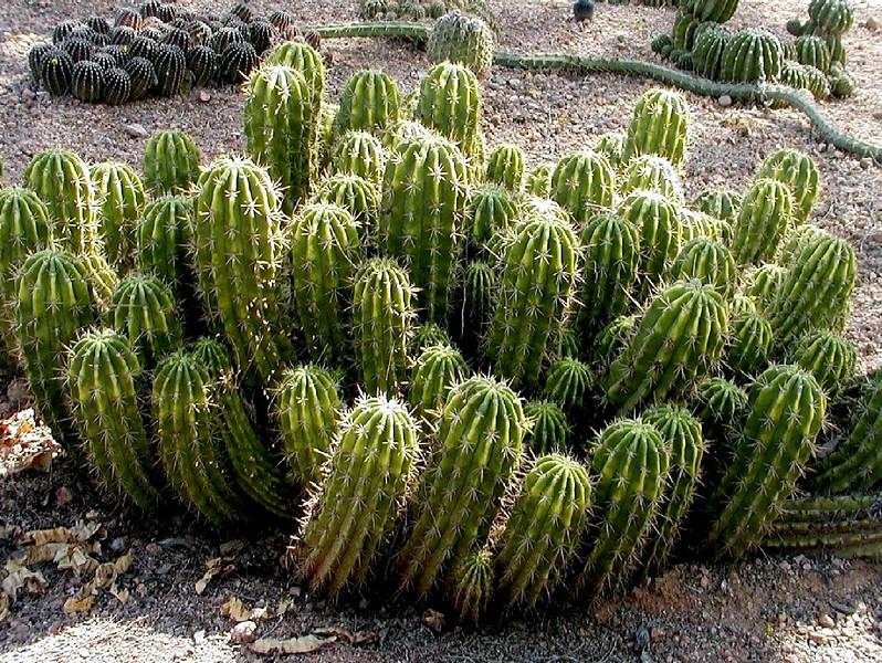 AZ-Phoenix-Desert Botanical Garden-2004-03-27-0028