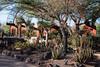 AZ-Phoenix-Desert Botanical Garden 2013-03-04-200
