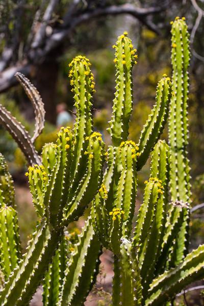 AZ-Phoenix-Desert Botanical Garden 2013-03-04-157