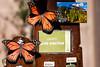 AZ-Phoenix-Desert Botanical Garden 2013-03-04-114
