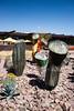 AZ-Phoenix-Desert Botanical Garden 2013-03-04-110