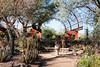 AZ-Phoenix-Desert Botanical Garden 2013-03-04-201