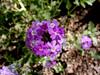 AZ-Phoenix-Desert Botanical Garden-2004-03-27-0009