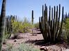 AZ-Phoenix-Desert Botanical Garden-2004-03-27-0016