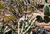 AZ-Phoenix-Desert Botanical Garden 2013-03-04-129