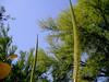 AZ-Phoenix-Desert Botanical Garden-2004-03-27-0045