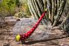 AZ-Phoenix-Desert Botanical Garden 2013-03-04-170