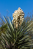 AZ-Phoenix-Desert Botanical Garden 2013-03-04-167
