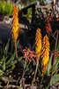 AZ-Phoenix-Desert Botanical Garden 2013-03-04-198