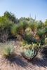 AZ-Phoenix-Desert Botanical Garden 2013-03-04-175