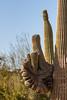 AZ-Phoenix-Desert Botanical Garden 2013-03-04-186