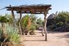 AZ-Phoenix-Desert Botanical Garden 2013-03-04-173