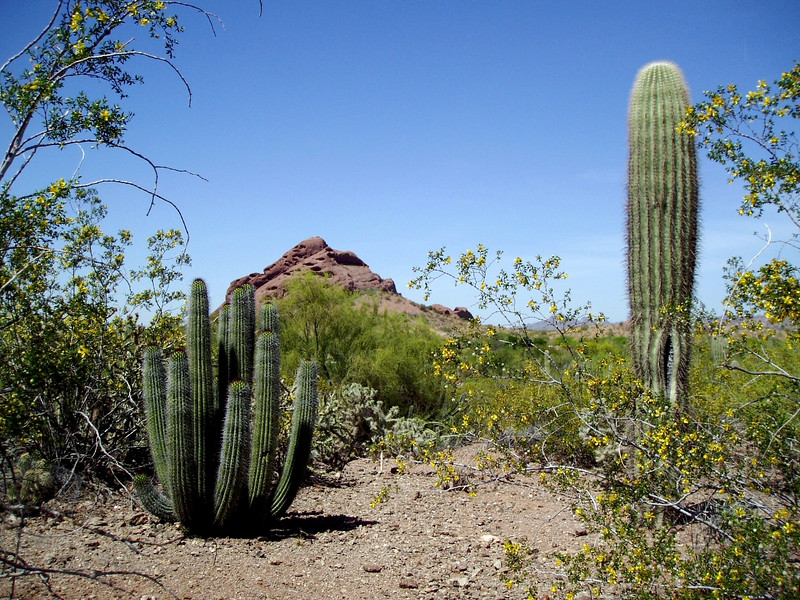 AZ-Phoenix-Desert Botanical Garden-2004-03-27-0017