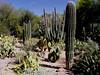 AZ-Phoenix-Desert Botanical Garden-2004-03-27-0018