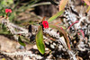AZ-Phoenix-Desert Botanical Garden 2013-03-04-140